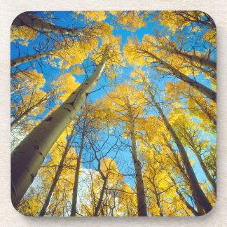 Fall colors of Aspen trees 2 Coaster