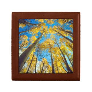 Fall colors of Aspen trees 2 Gift Box