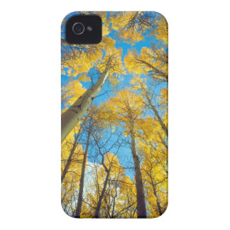 Fall colors of Aspen trees 2 iPhone 4 Cover