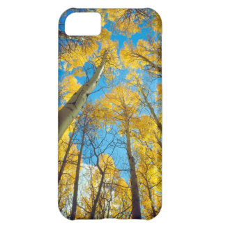 Fall colors of Aspen trees 2 iPhone 5C Case