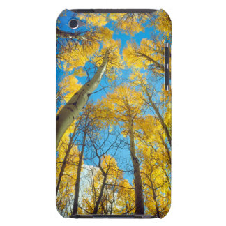 Fall colors of Aspen trees 2 iPod Case-Mate Cases
