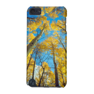 Fall colors of Aspen trees 2 iPod Touch (5th Generation) Cases
