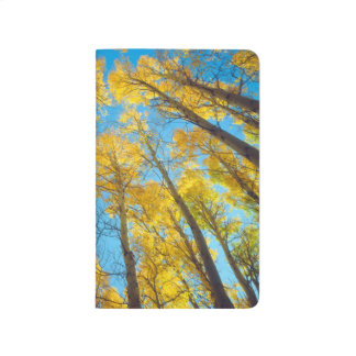 Fall colors of Aspen trees 2 Journal