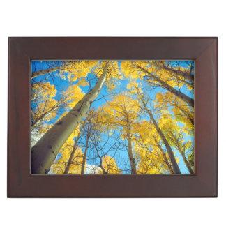 Fall colors of Aspen trees 2 Keepsake Box