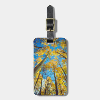 Fall colors of Aspen trees 2 Luggage Tag