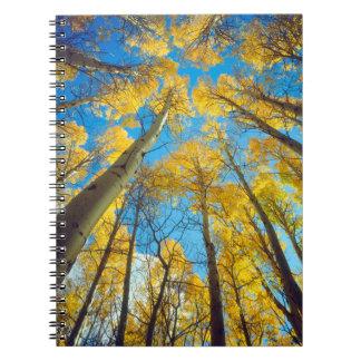 Fall colors of Aspen trees 2 Notebooks