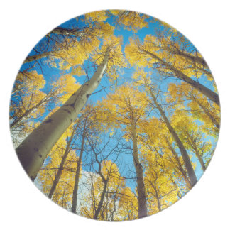 Fall colors of Aspen trees 2 Plate
