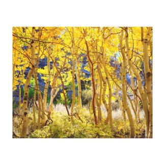 Fall colors of Aspen trees 3 Canvas Print