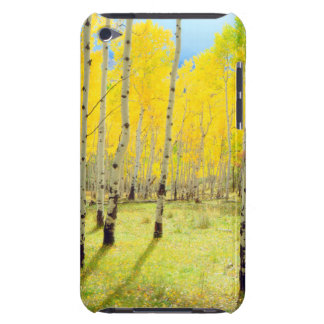 Fall colors of Aspen trees 4 Barely There iPod Case