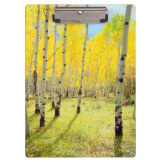 Fall colors of Aspen trees 4 Clipboard