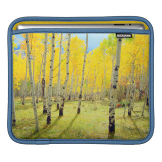 Fall colors of Aspen trees 4 iPad Sleeve
