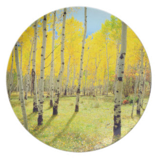 Fall colors of Aspen trees 4 Plate