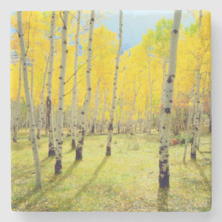 Fall colors of Aspen trees 4 Stone Coaster