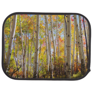 Fall colors of Aspen trees 5 Car Mat