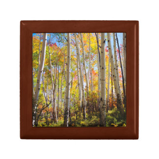Fall colors of Aspen trees 5 Gift Box