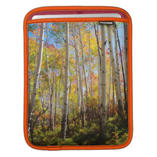 Fall colors of Aspen trees 5 iPad Sleeve