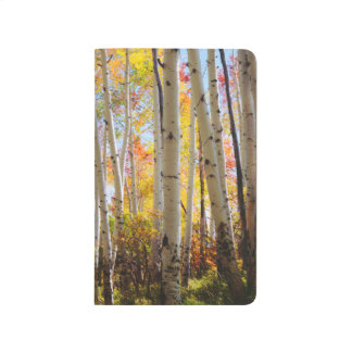 Fall colors of Aspen trees 5 Journal