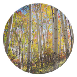 Fall colors of Aspen trees 5 Plate