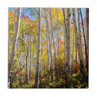 Fall colors of Aspen trees 5 Tile