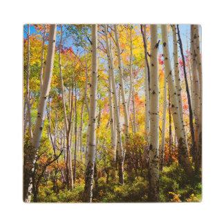 Fall colors of Aspen trees 5 Wood Coaster
