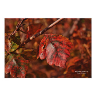 Fall Color's Photo