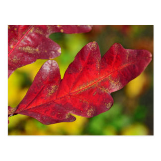 Fall Colors - Red Leaf Post Cards