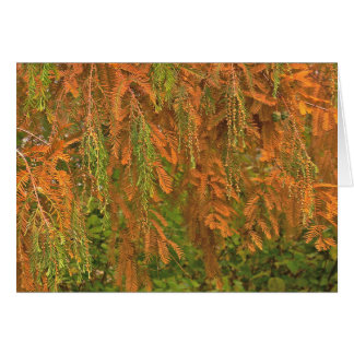 FALL COLORS (TREE-ORANGES AND GREENS) NOTECARD NOTE CARD