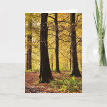 Fall colors woodland scene card