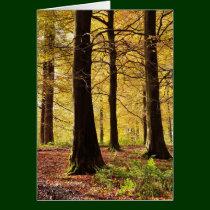 Fall colors woodland scene card
