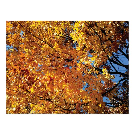 Fall Colour Racine Postcard