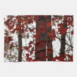 Fall Colours Autumn Trees Red Canadian Maple