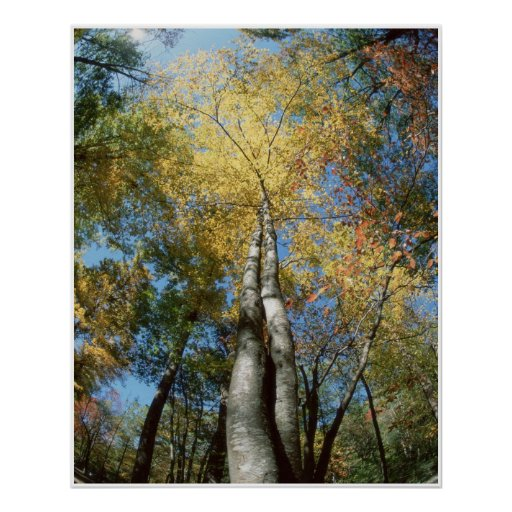 Fall Colours - Great Smoky Mountains - Trees Poster