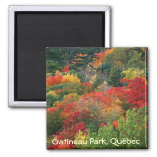 Fall colours in Gatineau Park Square Magnet