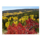 Fall Colours in Rockies Postcard