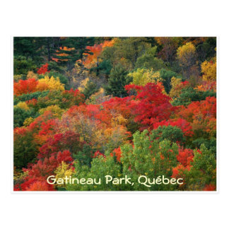 Fall Colours Postcard