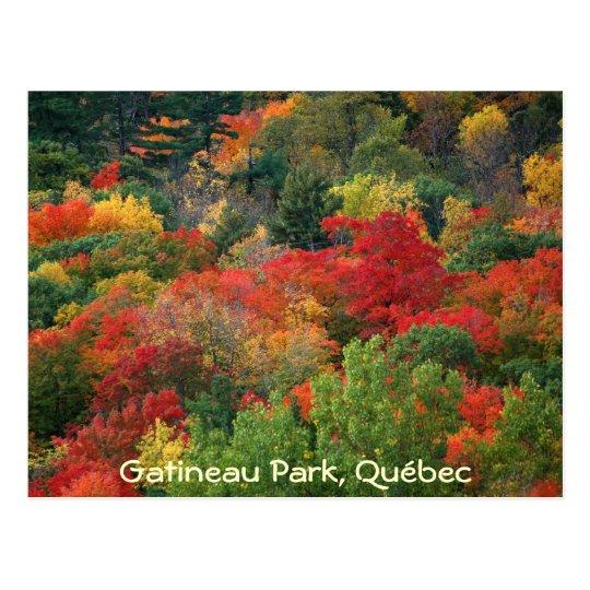 Fall Colours Postcard