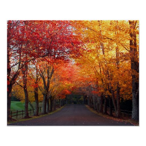 Fall Colours Print