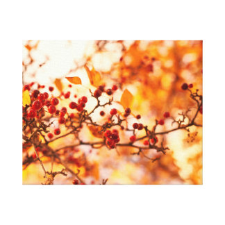 Fall colours winterberry tree canvas print