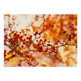 Fall colours winterberry tree nature landscape poster