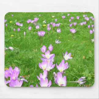 Fall Crocus in England Mouse Mat