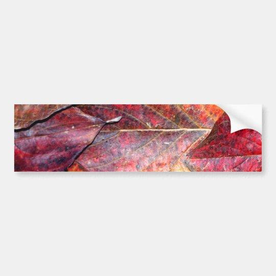 Fall Dogwood Leaves Bumper Sticker