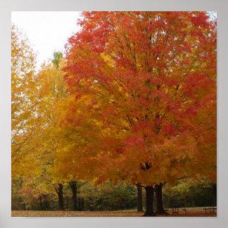 Fall Foliage 1 Poster