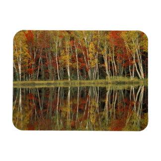 Fall Foliage and Birch Reflections; Hiawatha Magnet