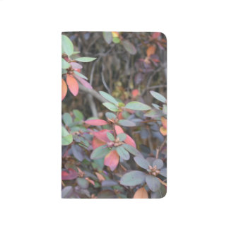 Fall Foliage Autumn Leaves Nature Tree Photography Journal