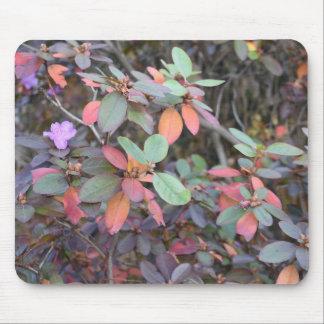 Fall Foliage Autumn Leaves Nature Tree Photography Mouse Mat