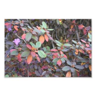 Fall Foliage Autumn Leaves Nature Tree Photography Photo Print