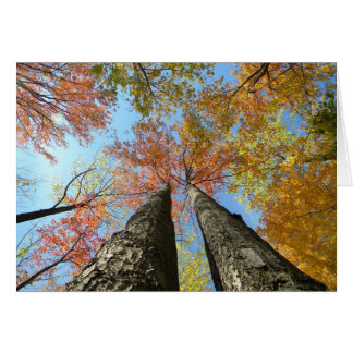 Fall foliage looking up 2 card