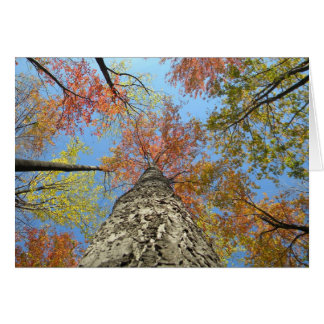Fall foliage looking up card