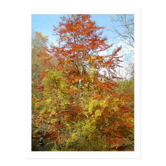 Fall Foliage Postcard