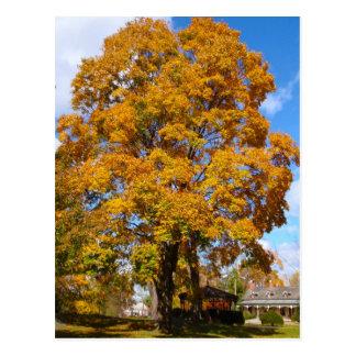 Fall Foliage Postcard